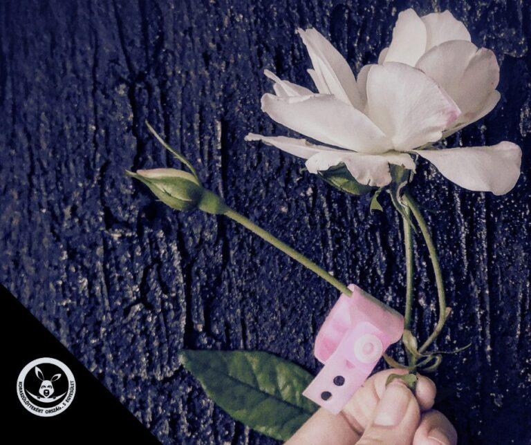 Október 15. a perinatális gyász világnapja
